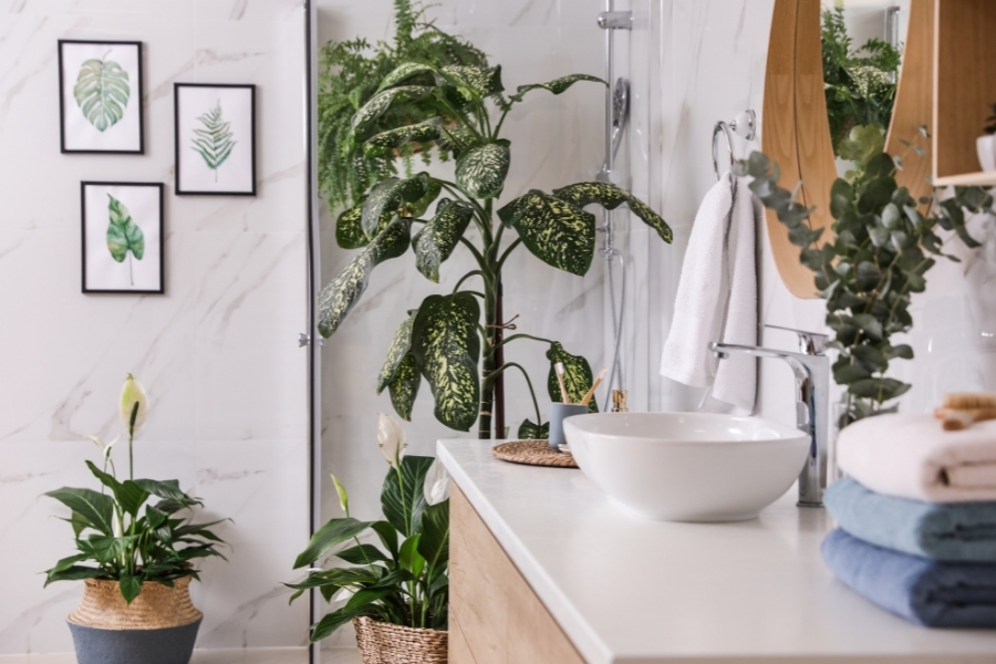 Green plants in elegant modern bathroom