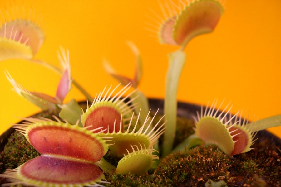 plants that eat bugs