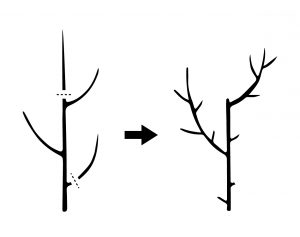 Thinning a tree
