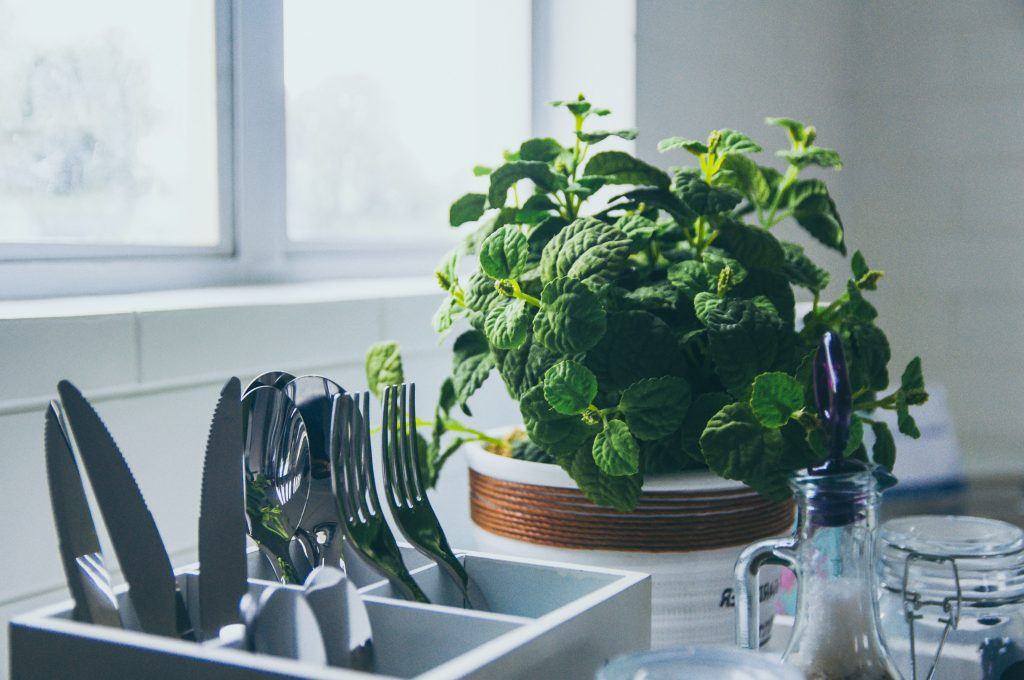 Neat and tidy basil plant