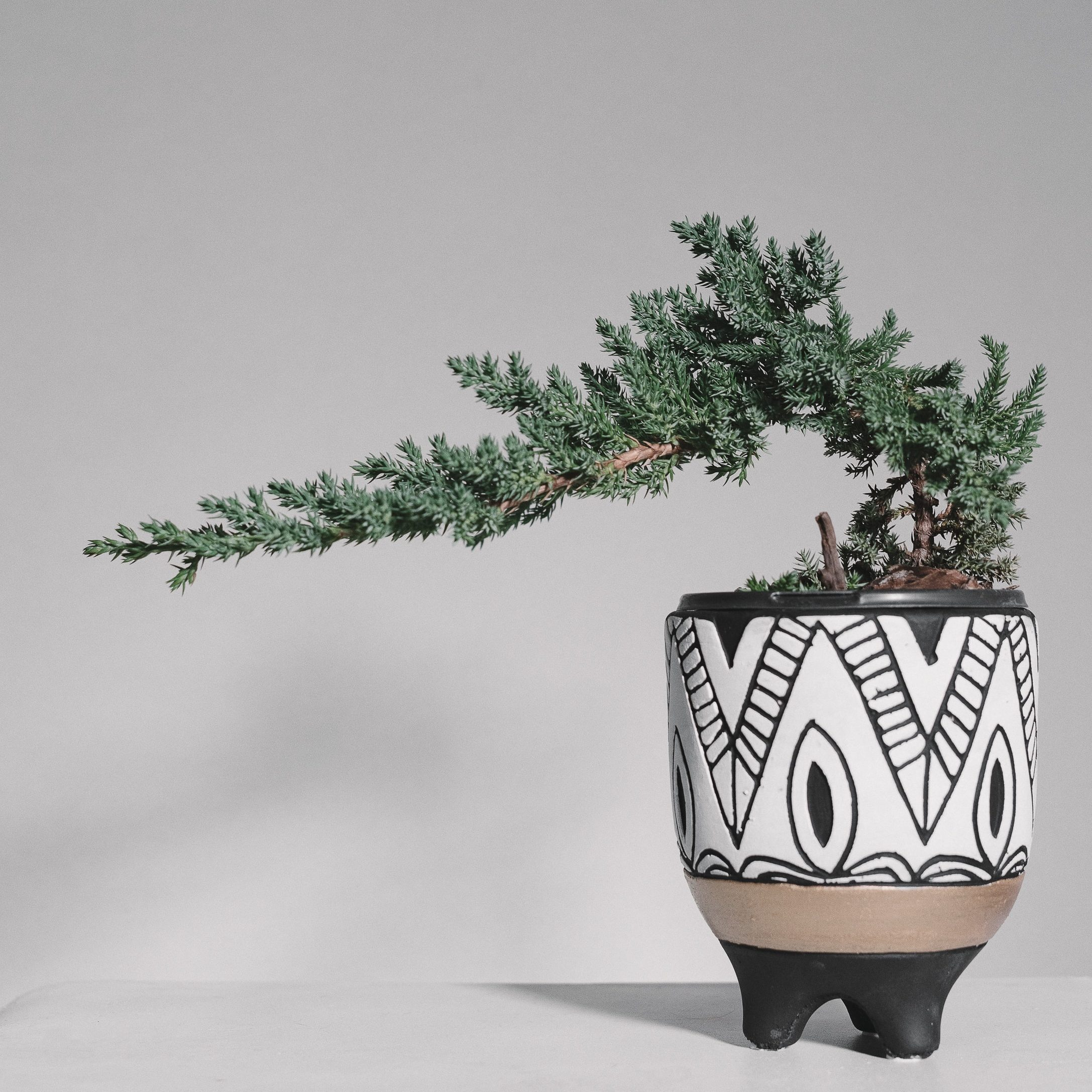Creating interesting shapes with pruning