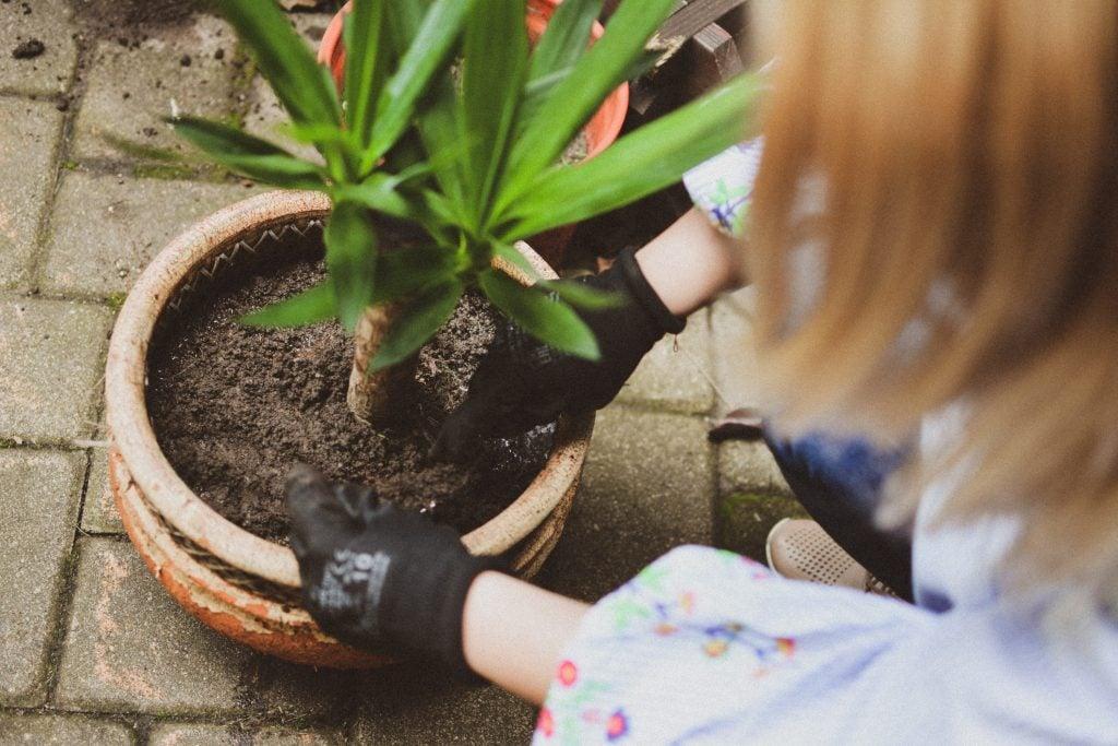 Woman cutting soil